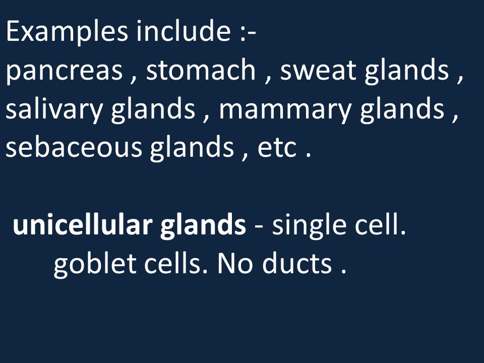 Examples include :- pancreas , stomach , sweat glands , salivary glands , mammary glands , sebaceous glands , etc .