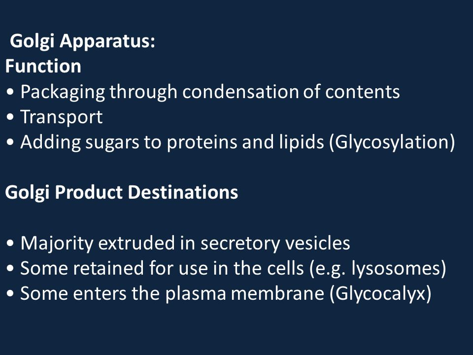 Golgi Apparatus: Function • Packaging through condensation of contents • Transport • Adding sugars to proteins and lipids (Glycosylation) Golgi Product Destinations • Majority extruded in secretory vesicles • Some retained for use in the cells (e.g.
