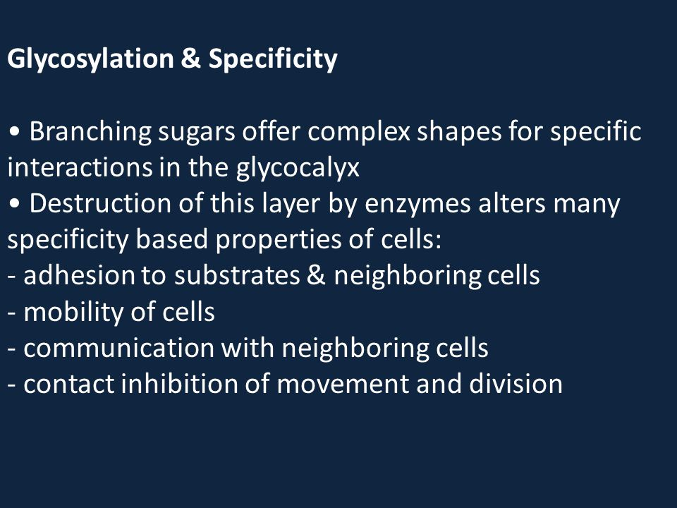 Glycosylation & Specificity • Branching sugars offer complex shapes for specific interactions in the glycocalyx • Destruction of this layer by enzymes alters many specificity based properties of cells: - adhesion to substrates & neighboring cells - mobility of cells - communication with neighboring cells - contact inhibition of movement and division