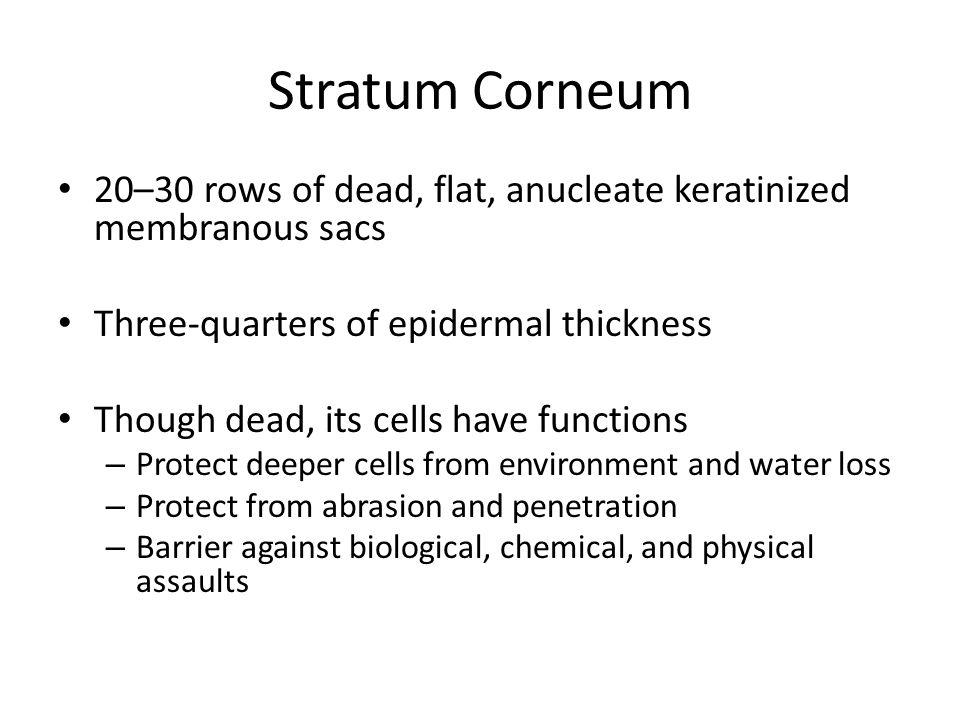 Stratum Corneum 20–30 rows of dead, flat, anucleate keratinized membranous sacs. Three-quarters of epidermal thickness.