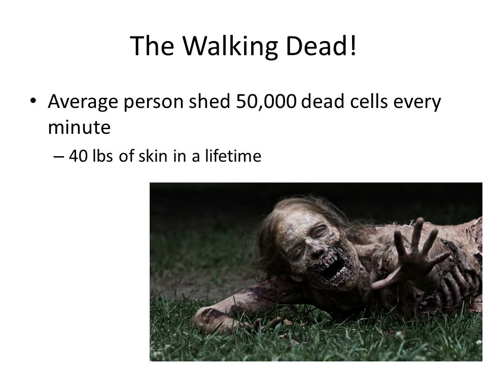 The Walking Dead! Average person shed 50,000 dead cells every minute
