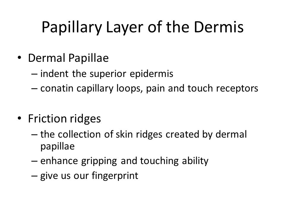 Papillary Layer of the Dermis