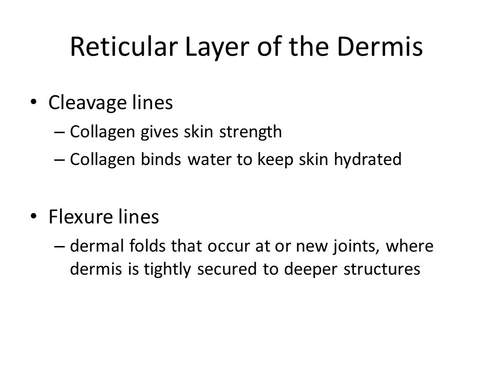 Reticular Layer of the Dermis