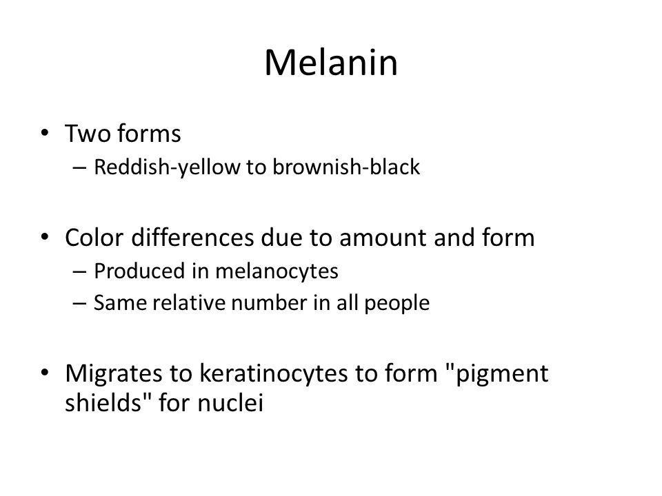 Melanin Two forms Color differences due to amount and form