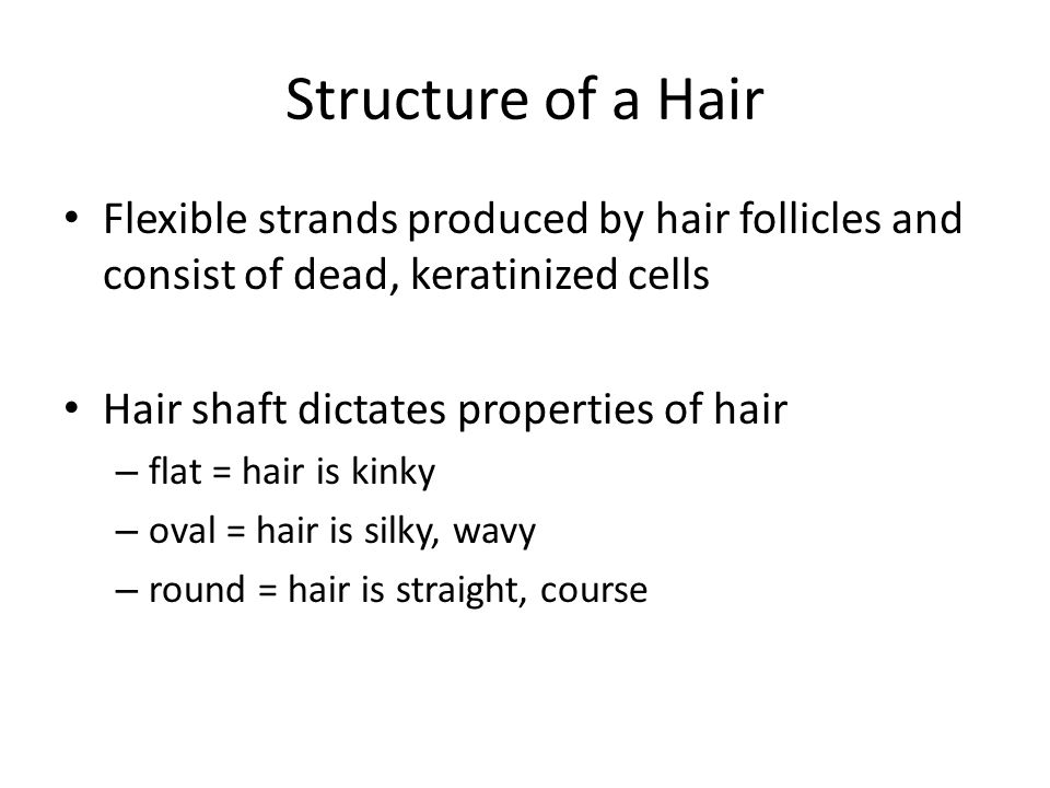 Structure of a Hair Flexible strands produced by hair follicles and consist of dead, keratinized cells.