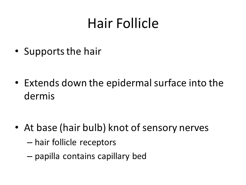 Hair Follicle Supports the hair