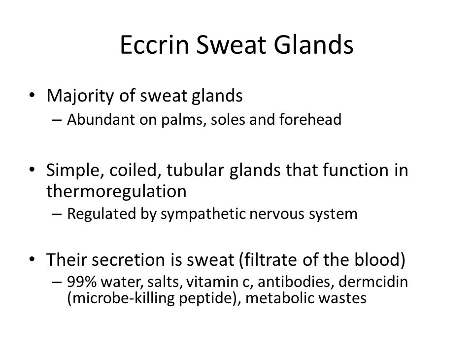 Eccrin Sweat Glands Majority of sweat glands