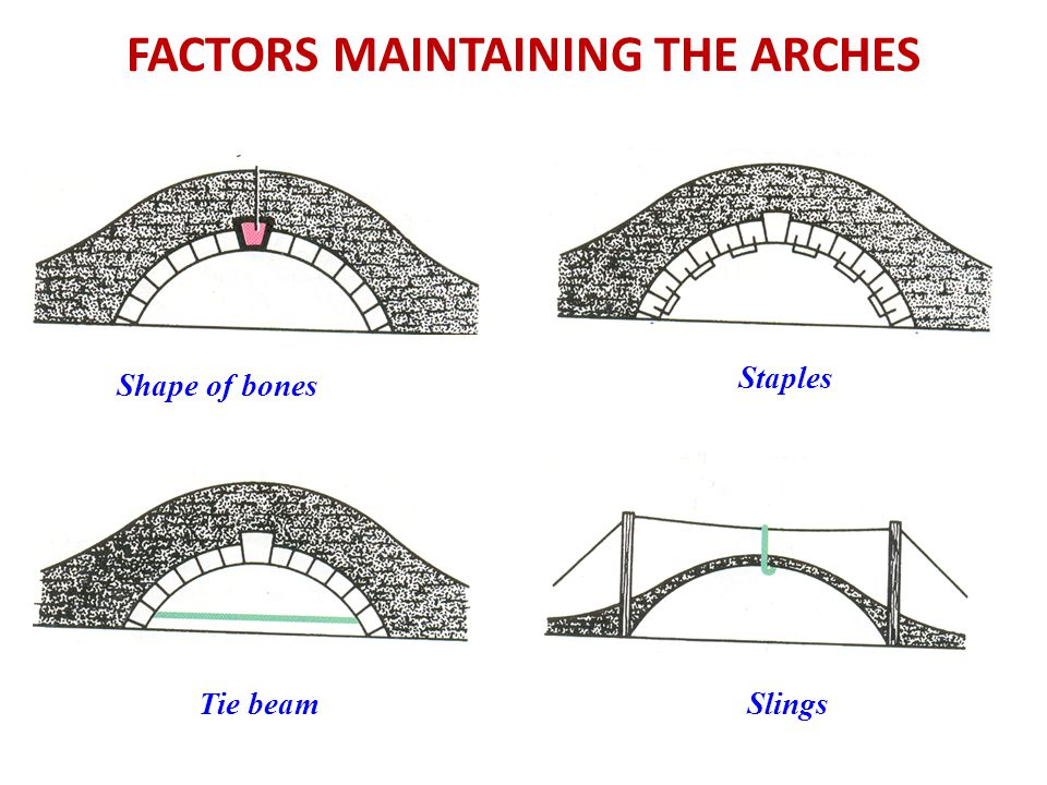 FACTORS MAINTAINING THE ARCHES