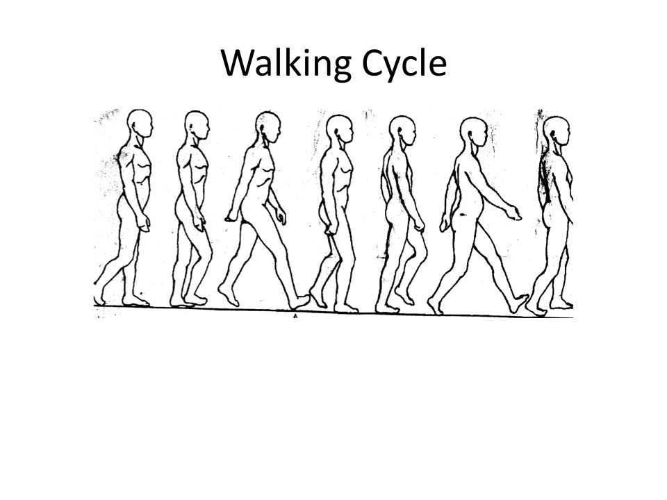 Walking Cycle