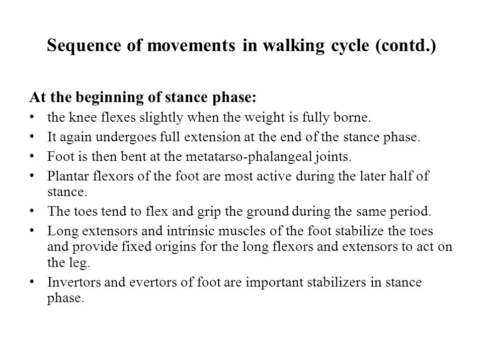Sequence of movements in walking cycle (contd.)