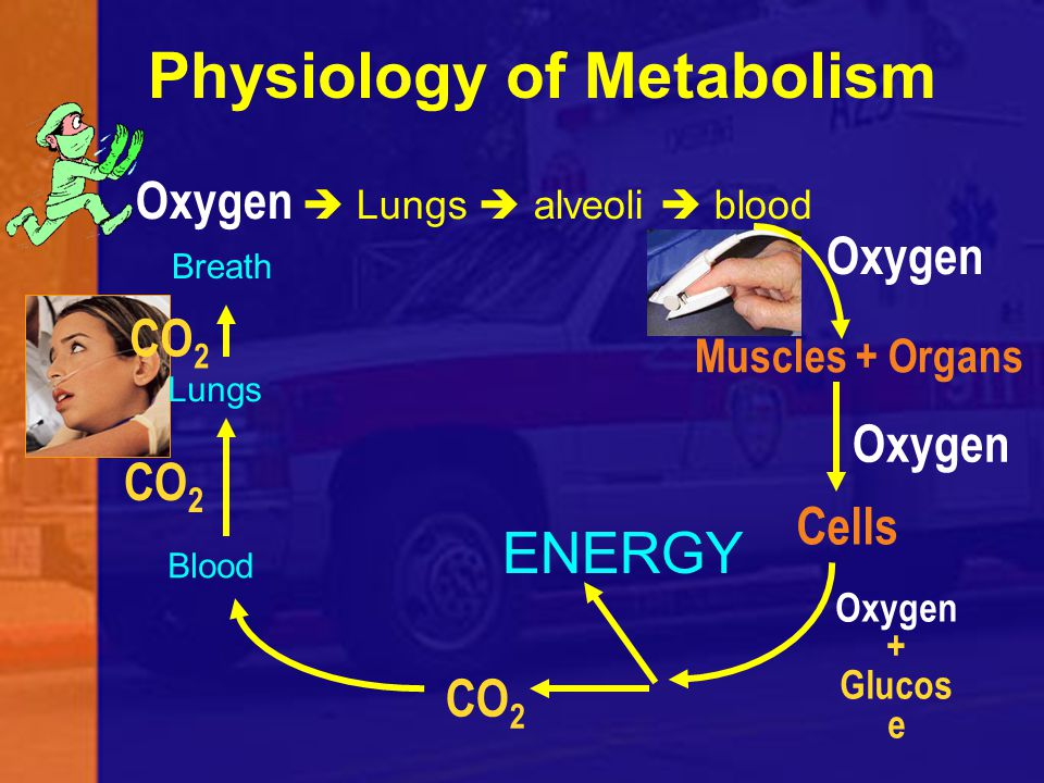 Physiology of Metabolism