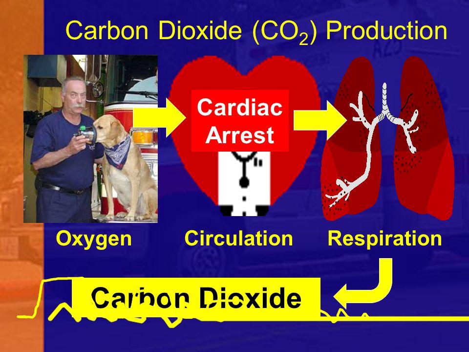 Carbon Dioxide (CO2) Production