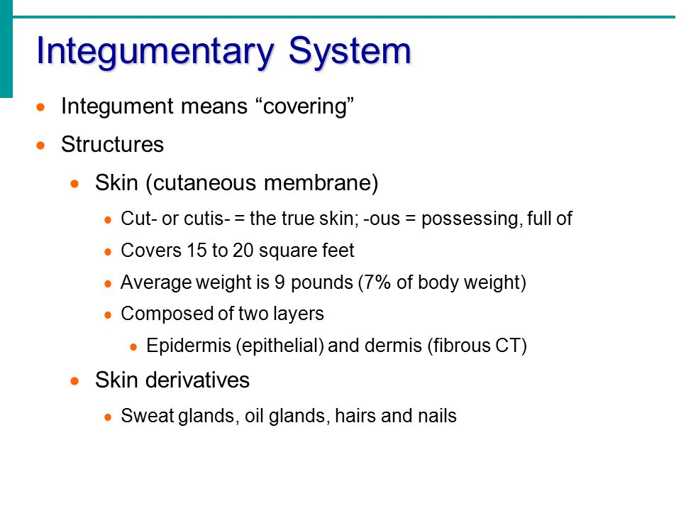 Integumentary System Integument means covering Structures
