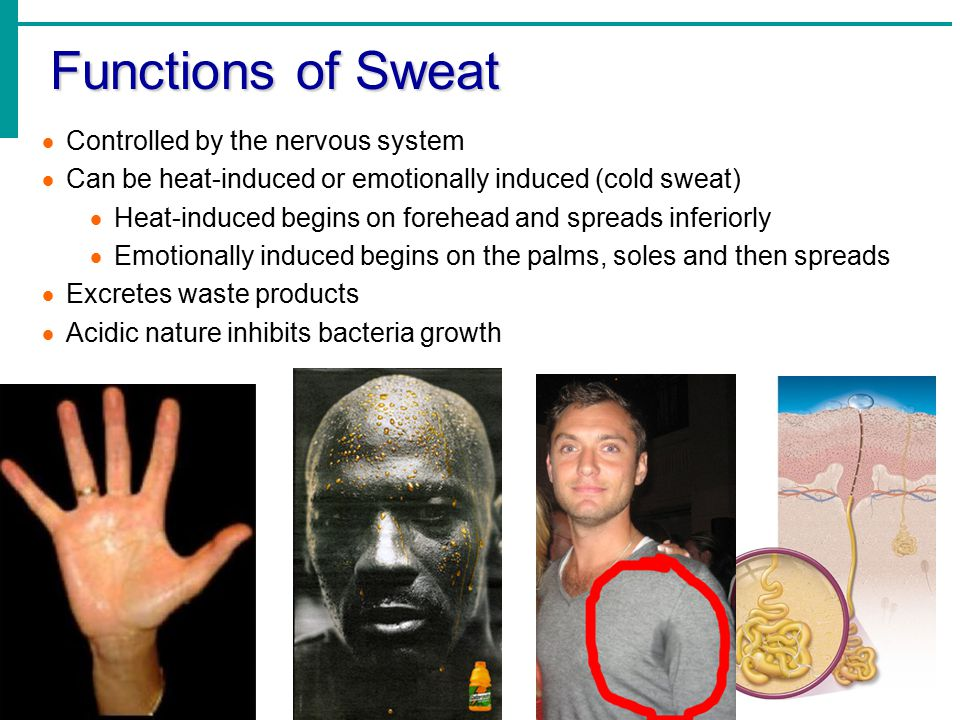 Functions of Sweat Controlled by the nervous system