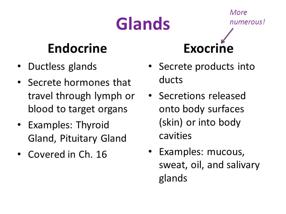 Glands Endocrine Exocrine Ductless glands