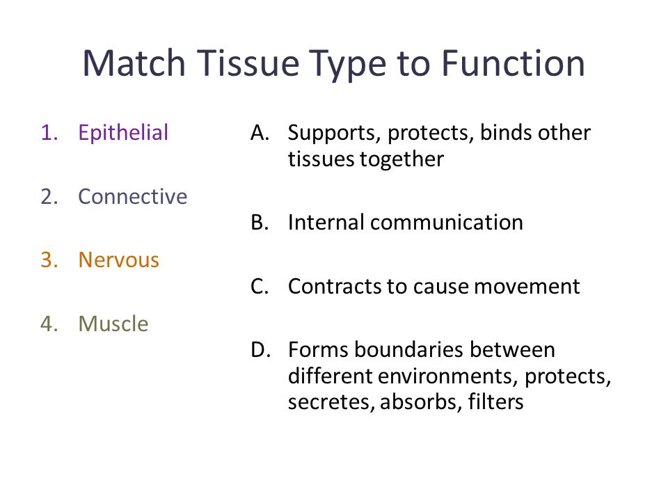 Match Tissue Type to Function