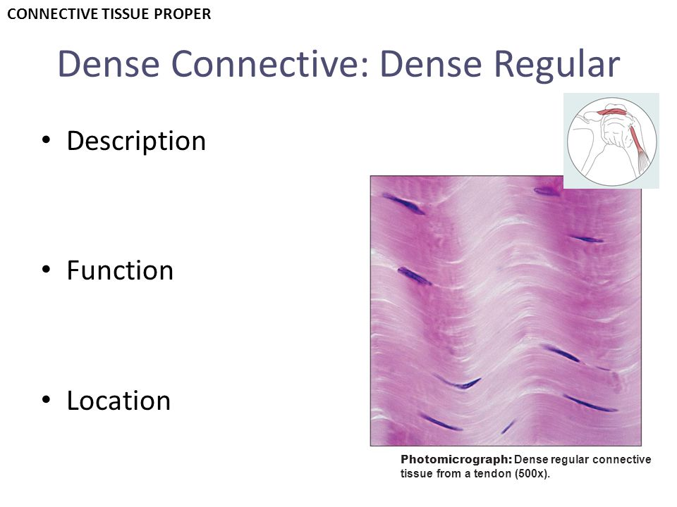 Dense Connective: Dense Regular