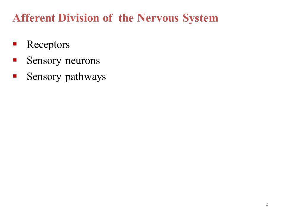 Afferent Division of the Nervous System