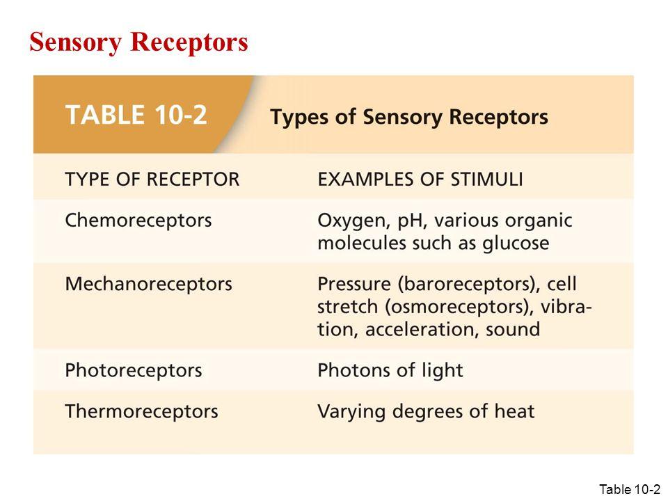Sensory Receptors Table 10-2