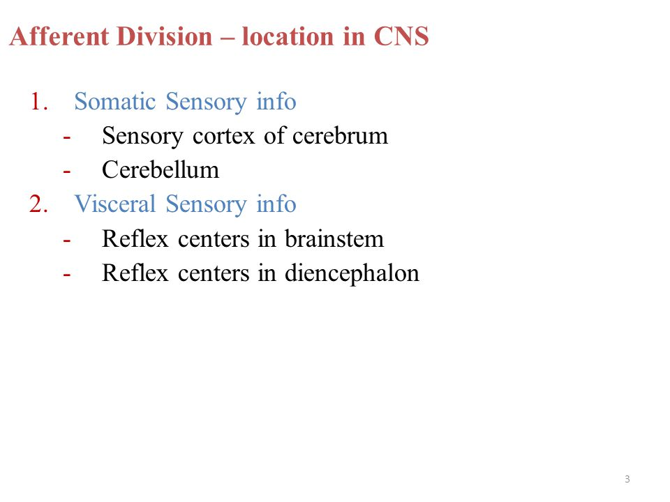 Afferent Division – location in CNS