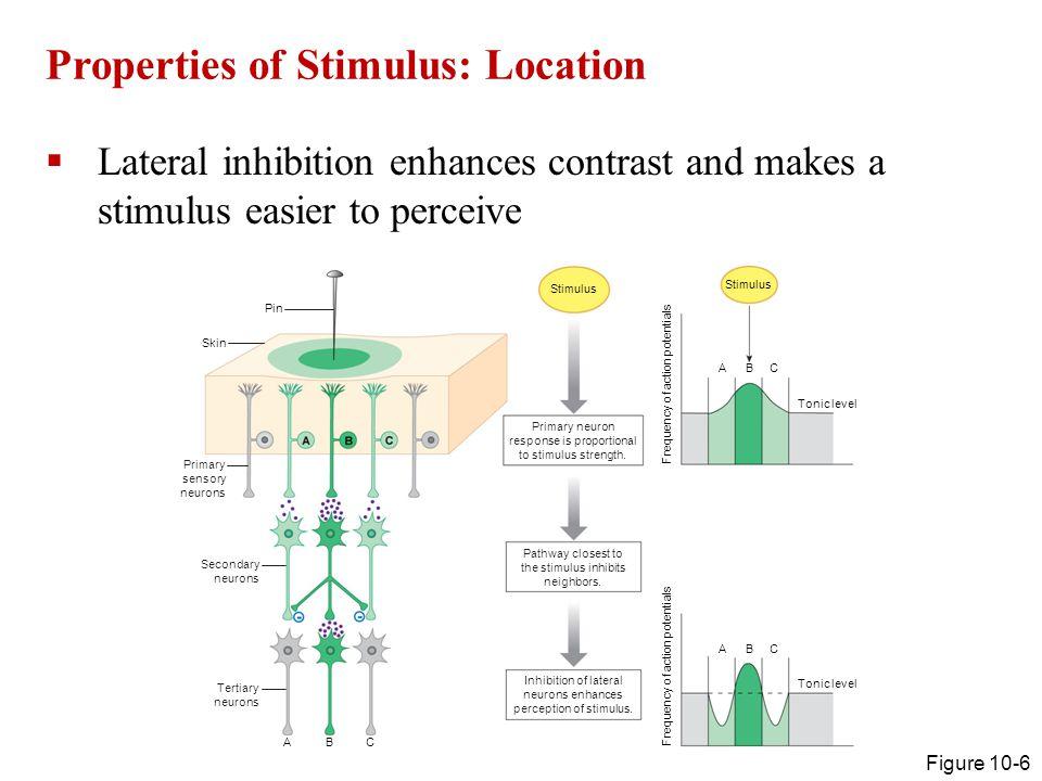 Properties of Stimulus: Location