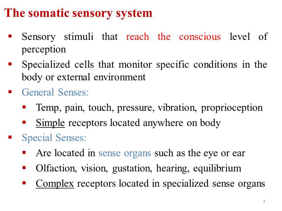The somatic sensory system