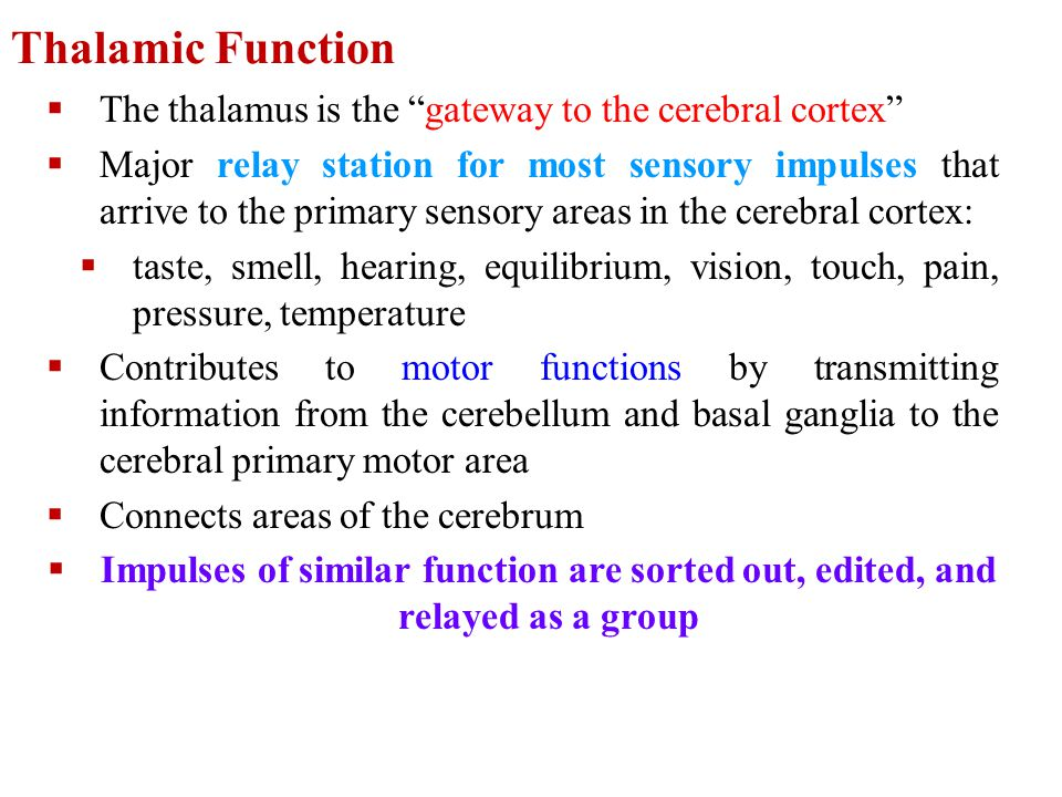 Thalamic Function The thalamus is the gateway to the cerebral cortex