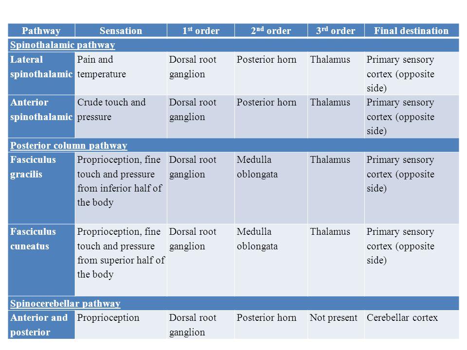 Pathway Sensation. 1st order. 2nd order. 3rd order. Final destination. Spinothalamic pathway. Lateral spinothalamic.