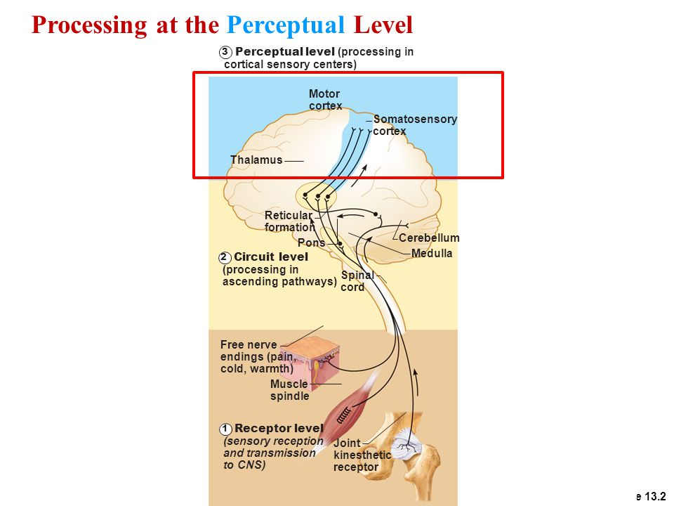 Processing at the Perceptual Level