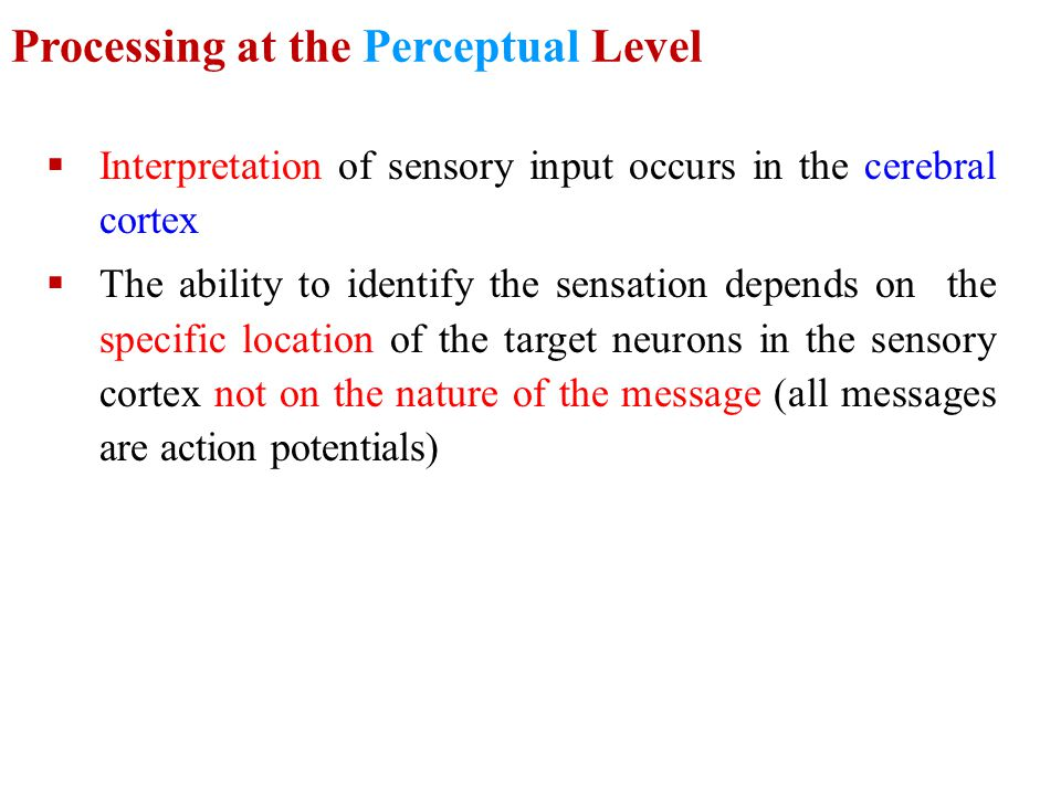 Processing at the Perceptual Level