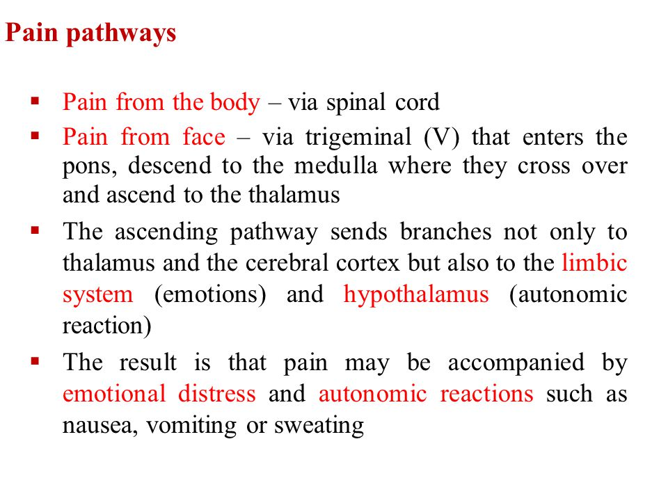 Pain pathways Pain from the body – via spinal cord