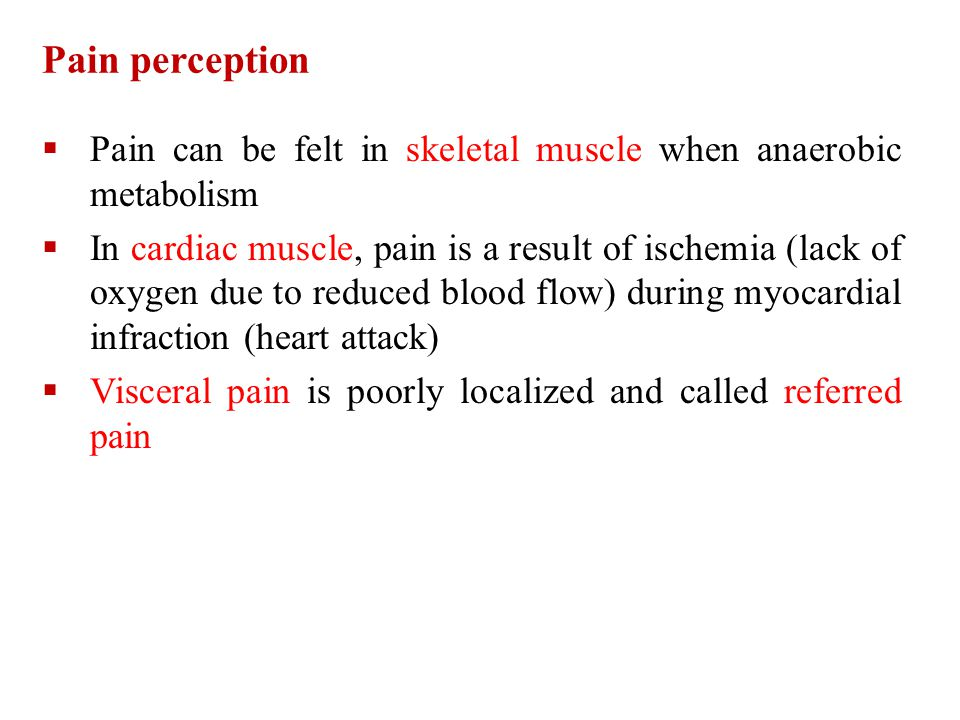 Pain perception Pain can be felt in skeletal muscle when anaerobic metabolism.
