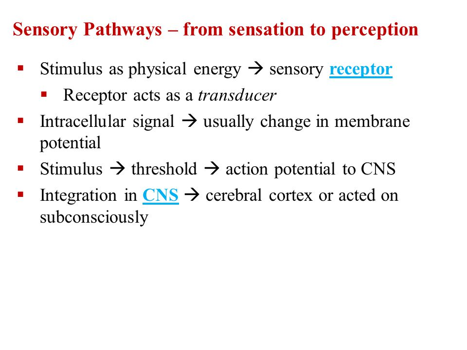 Sensory Pathways – from sensation to perception