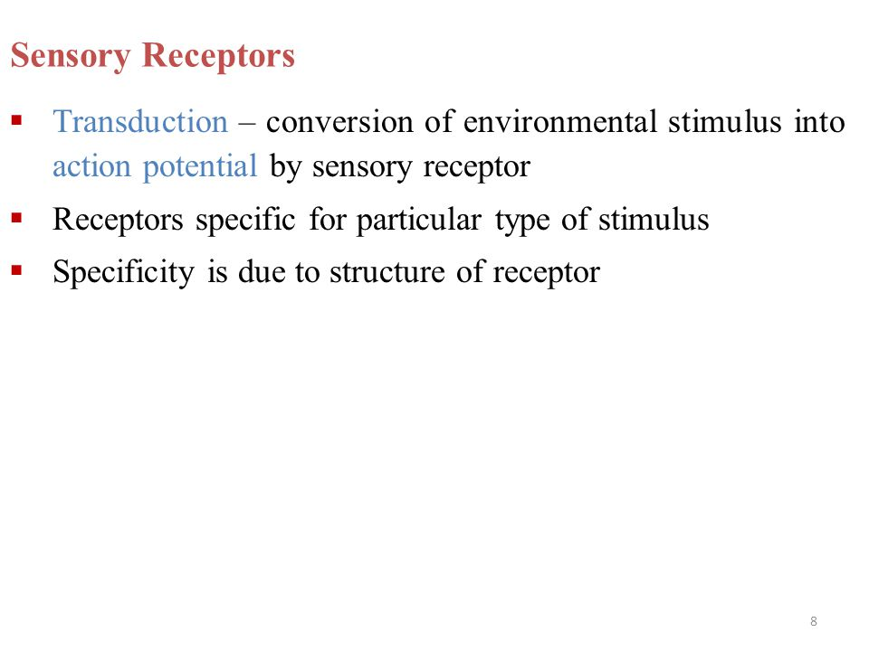 Sensory Receptors Transduction – conversion of environmental stimulus into action potential by sensory receptor.