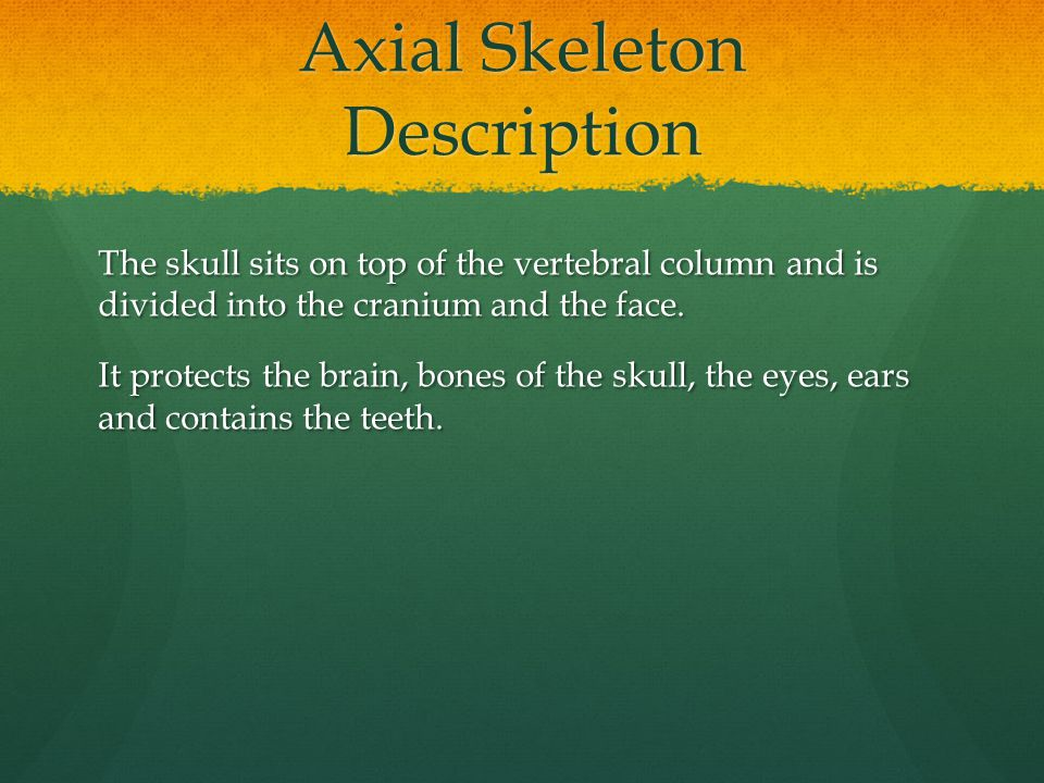 Axial Skeleton Description