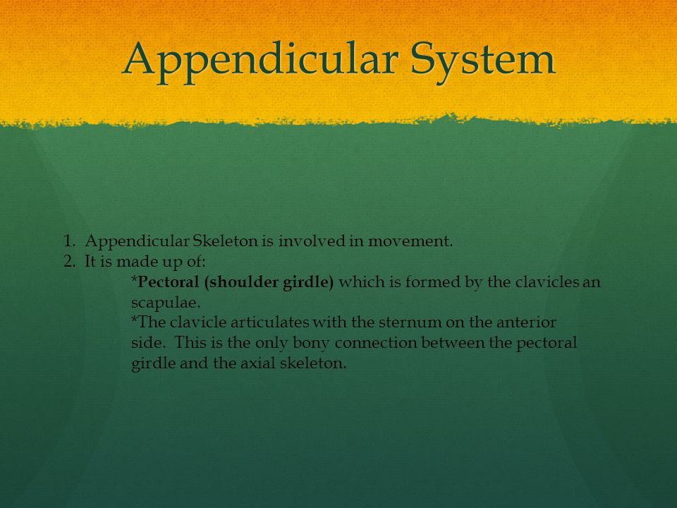 Appendicular System 1. Appendicular Skeleton is involved in movement.