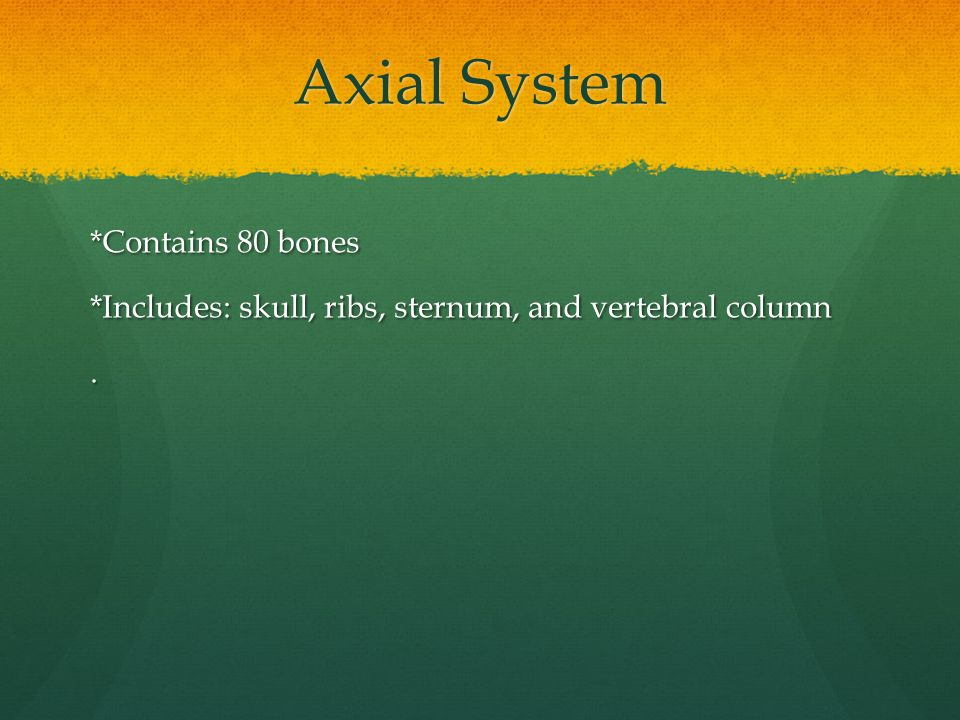 Axial System *Contains 80 bones *Includes: skull, ribs, sternum, and vertebral column .
