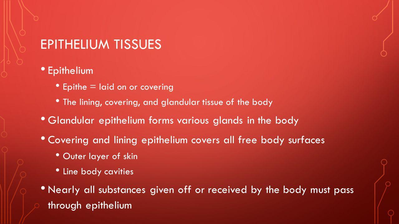 Epithelium tissues Epithelium