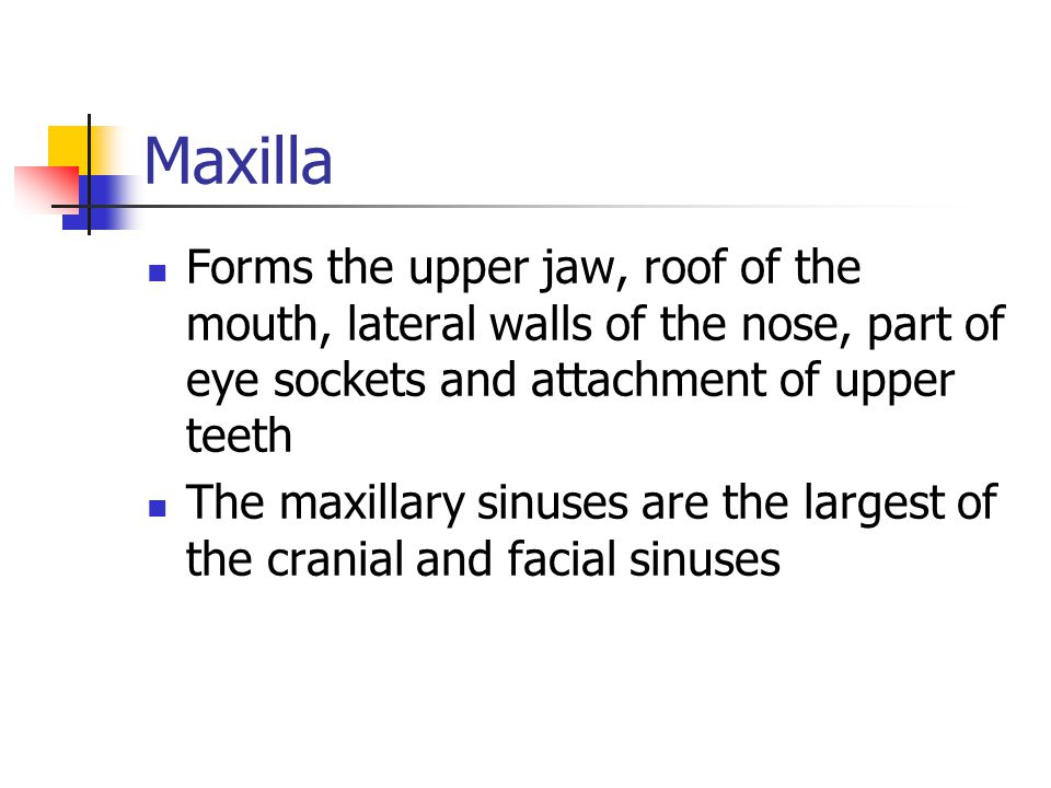 Maxilla Forms the upper jaw, roof of the mouth, lateral walls of the nose, part of eye sockets and attachment of upper teeth.