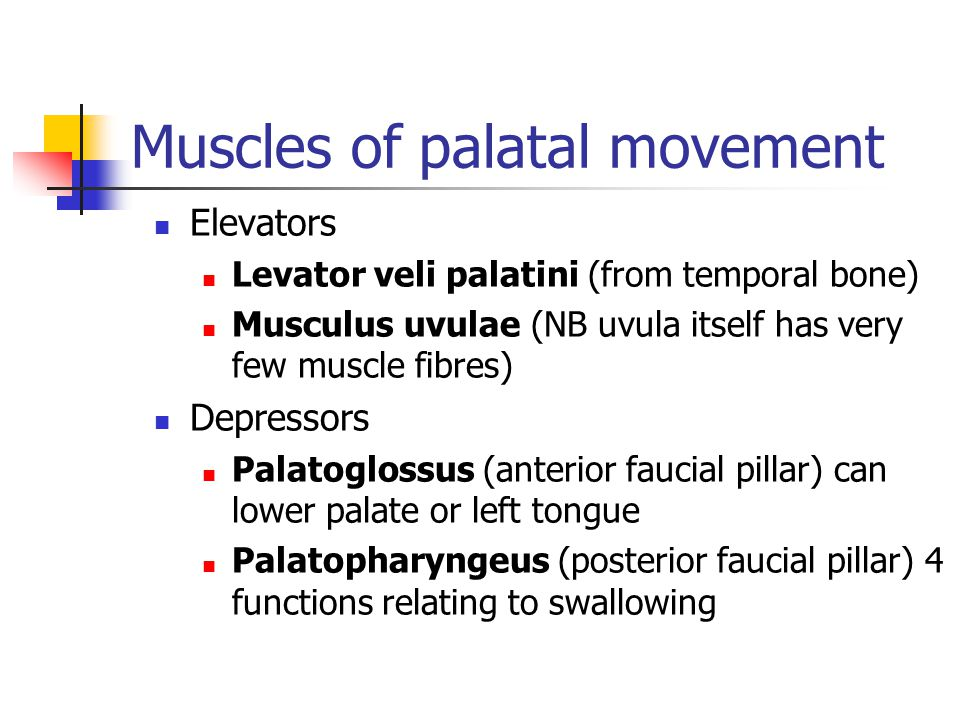 Muscles of palatal movement