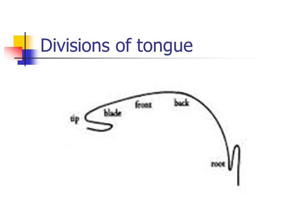 Divisions of tongue