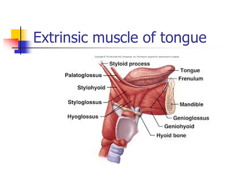 Extrinsic muscle of tongue