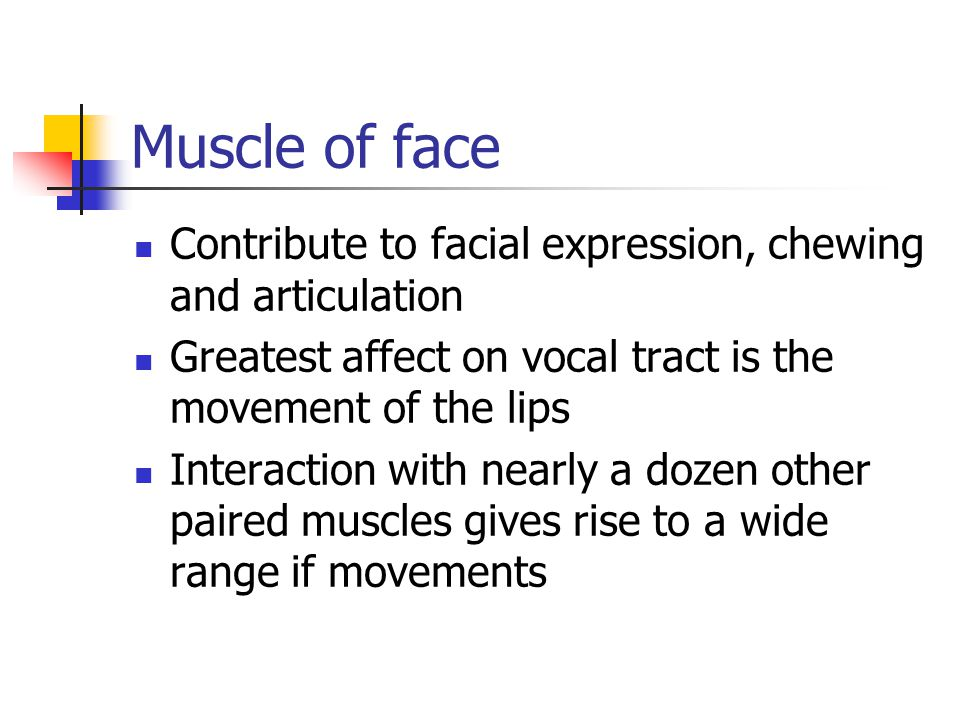 Muscle of face Contribute to facial expression, chewing and articulation. Greatest affect on vocal tract is the movement of the lips.