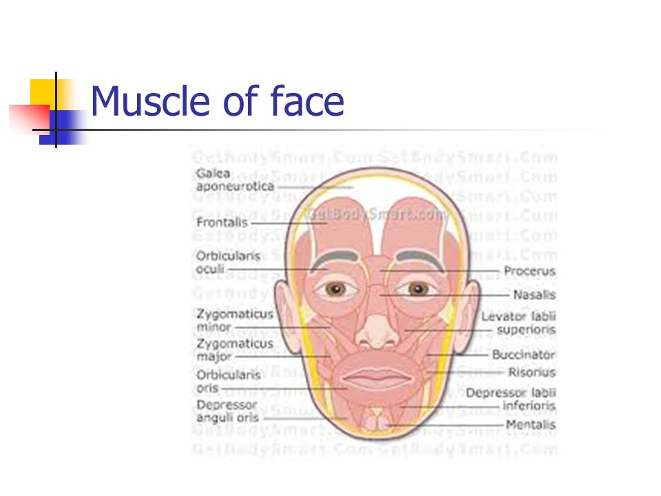 Muscle of face