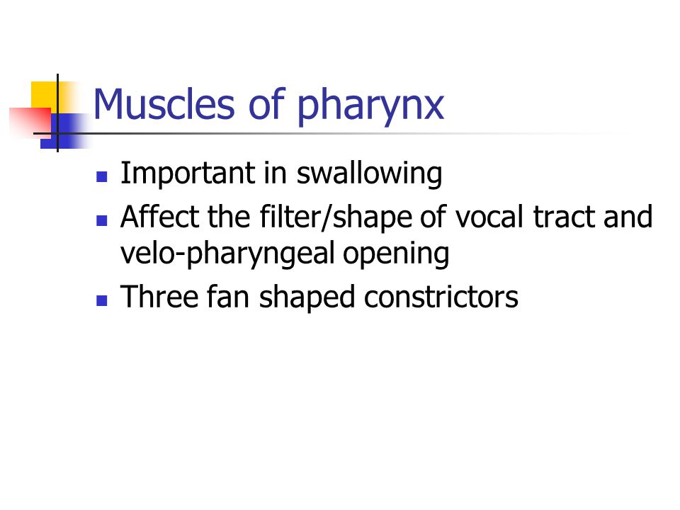 Muscles of pharynx Important in swallowing