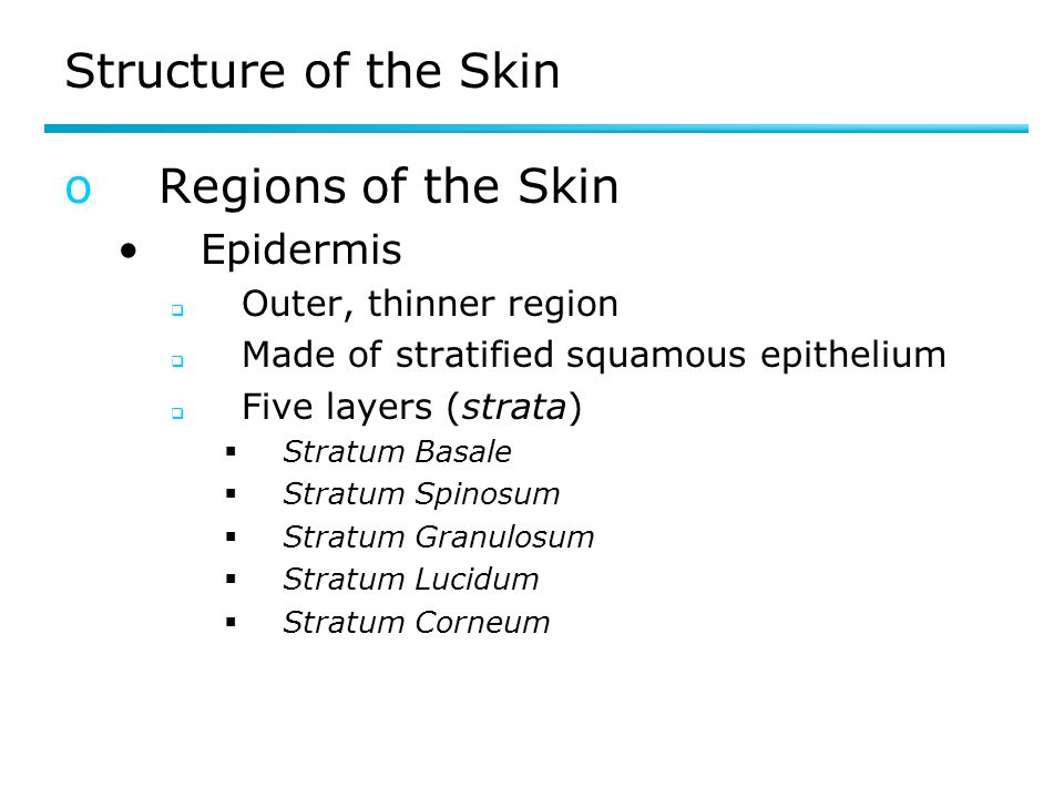 Structure of the Skin Regions of the Skin Epidermis