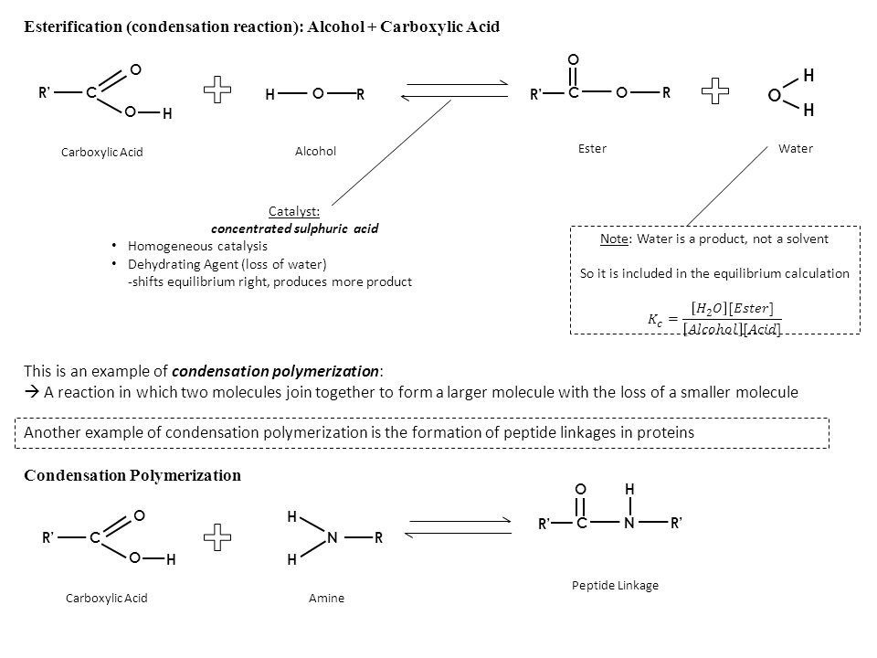 Esterification (condensation reaction): Alcohol + Carboxylic Acid