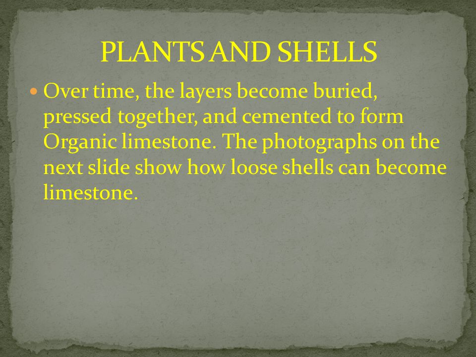 PLANTS AND SHELLS