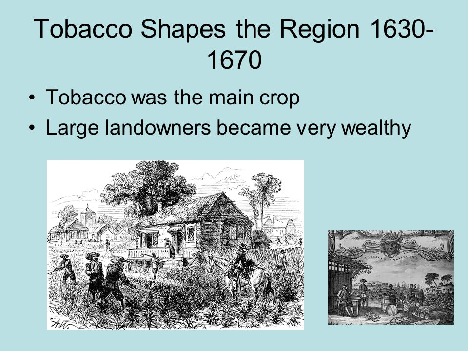 Tobacco Shapes the Region 1630-1670