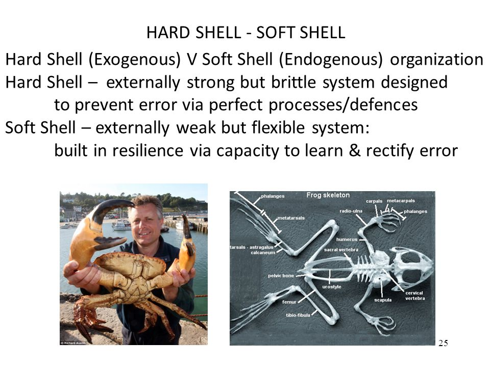 HARD SHELL - SOFT SHELL Hard Shell (Exogenous) V Soft Shell (Endogenous) organization. Hard Shell – externally strong but brittle system designed.
